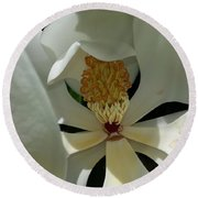 Round Beach Towel featuring the photograph Coy Magnolia by Caryl J Bohn