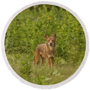 Coyote Happy Round Beach Towel by Eric Liller