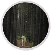 Coyote Howling In Woods Round Beach Towel