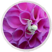 Crab Spider And Dahlia Round Beach Towel