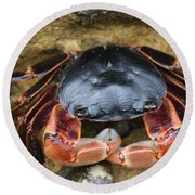 Crabby Pants  Round Beach Towel