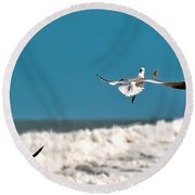Round Beach Towel featuring the photograph Cracker Tracker by DigiArt Diaries by Vicky B Fuller