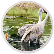 Crane Family Goes For A Swim Round Beach Towel by Susan Molnar