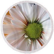 Round Beach Towel featuring the photograph Creamsicle by Jean OKeeffe Macro Abundance Art