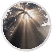 Crepuscular Rays Coming Through Tree In Fog At Sunrise Round Beach Towel