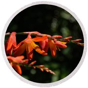 Crocosmia 'dusky Maiden' Flowers Round Beach Towel