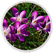 Crocus In The Grass Round Beach Towel