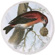 Crossbill Round Beach Towel