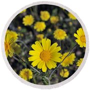 Round Beach Towel featuring the photograph Crown Daisies by George Atsametakis