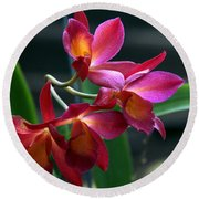 Ctna New River Orchid Round Beach Towel