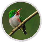 Cuban Tody Round Beach Towel by Tony Beck