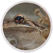 Cuban Treefrog Round Beach Towel