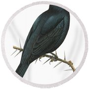 Cuckoo Shrike Round Beach Towel by Anonymous