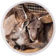 Cuddling Kangaroos Round Beach Towel