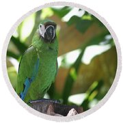 Curacao Parrot Round Beach Towel