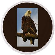 Round Beach Towel featuring the photograph Curious Bald Eagle by Bruce Bley