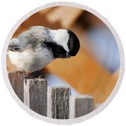 Curious Chickadee Round Beach Towel