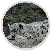 Curious Snow Leopard Cub Round Beach Towel