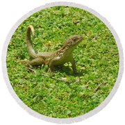 Curly-tailed Lizard Round Beach Towel by Ron Davidson