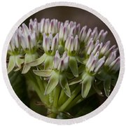 Round Beach Towel featuring the photograph Curtiss' Milkweed #3 by Paul Rebmann