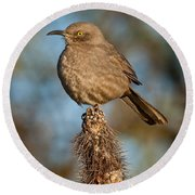 Curve-billed Thrasher On A Cactus Round Beach Towel