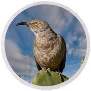Curve-billed Thrasher On A Prickly Pear Cactus Round Beach Towel