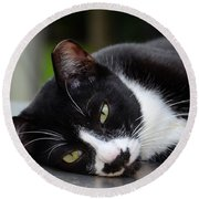 Cute Black And White Tuxedo Cat With Nipped Ear Rests  Round Beach Towel