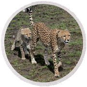 Cute Cheetah Wait For Me Mommy Round Beach Towel