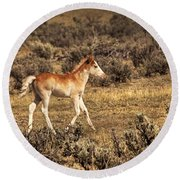 Cute Colt Wild Horse On Navajo Indian Reservation  Round Beach Towel