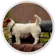 Cute Dog On Carriage Seat Bruges Belgium Round Beach Towel