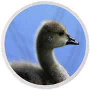 Round Beach Towel featuring the photograph Cygnet by Alyce Taylor