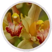 Cymbidium Twins Round Beach Towel