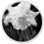 Daffodil Flower Black And White Round Beach Towel