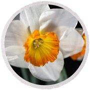 Daffodil In White Round Beach Towel by Joy Watson