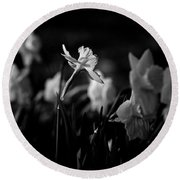 Daffodils In Black And White Round Beach Towel