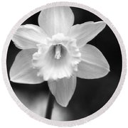 Daffodils - Infrared 10 Round Beach Towel