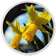 Daffodils Round Beach Towel by Joseph Skompski