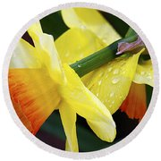 Round Beach Towel featuring the photograph Daffodils With Rain by Joe Schofield