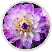 Dahlia Flower With Purple Tips Round Beach Towel