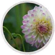 Dahlia In The Mist Round Beach Towel by Jeanette C Landstrom