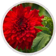 Dahlia Perfection Round Beach Towel by Jane Luxton