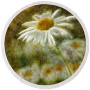 Daisies ... Again - P11at01 Round Beach Towel