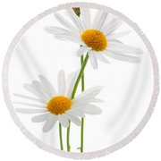 Daisies On White Background Round Beach Towel by Elena Elisseeva