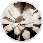 Round Beach Towel featuring the photograph Daisy by Debra Forand
