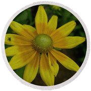 Round Beach Towel featuring the photograph Daisy  by James C Thomas