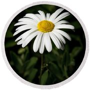 Daisy In The Garden Round Beach Towel