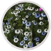 Daisy Pastel Round Beach Towel by Rich Collins