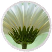 Daisy Sweetness Round Beach Towel