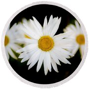 Daisy Trio Round Beach Towel