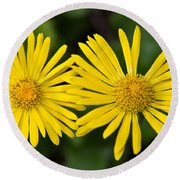 Round Beach Towel featuring the photograph Daisy Twins by Aaron Berg